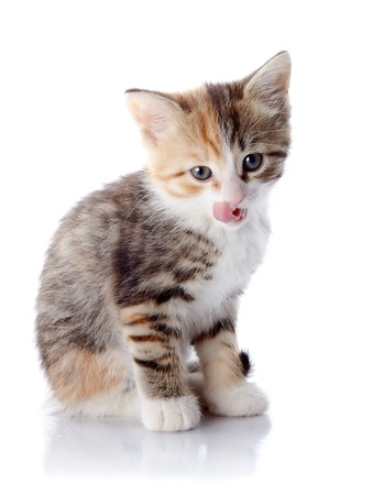 Multi-colored licking lips kitten. Kitten on a white background. Small predator. Stock Photo - 19549538