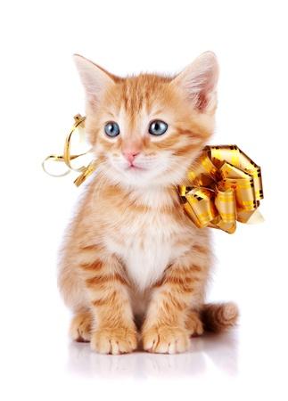 fiocco oro: Gattino rosso. Gattino a strisce rosso con un arco d'oro. Seduto cat. Gattino su uno sfondo bianco. Gattino rosso a righe. Piccolo predatore.