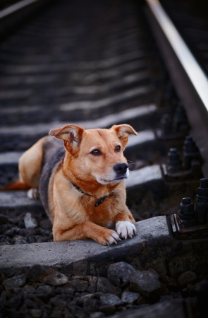 Grieving Dog The Lost Dog Sad