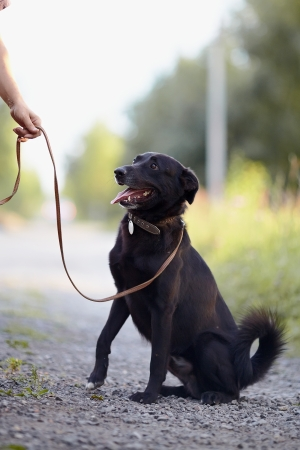 The black dog sits on the road. Not purebred dog. Doggie on walk. The large not purebred mongrel. Stock Photo - 21193339