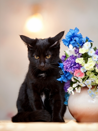 The black cat sits near a vase with the flowers. Black kitten. Black cat. Small predator.