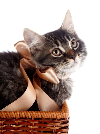Fluffy cat with a bow in a wattled basket. Fluffy cat with brown eyes.  Striped not purebred kitten. Kitten on a white background. Small predator. Small cat. photo