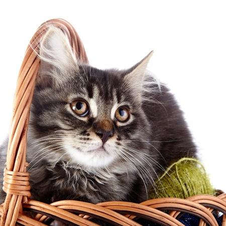 Fluffy cat in a wattled basket with woolen balls  Striped not purebred kitten  Kitten on a white background  Small predator  Small cat  Фото со стока