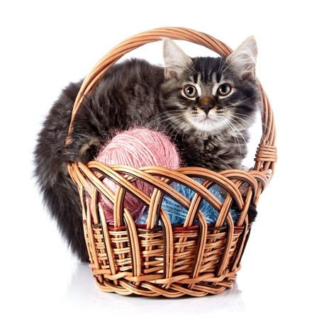Fluffy cat in a wattled basket with woolen balls  Striped not purebred kitten  Kitten on a white background  Small predator  Small cat  photo