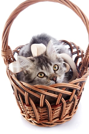 Striped cat with a tape in a wattled basket. Fluffy cat with yellow eyes.  Striped not purebred kitten. Kitten on a white background. Small predator. Small cat.