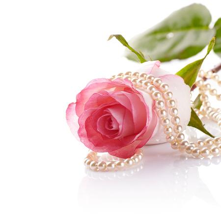 핑크 장미. 흰색 배경에 상승했다. 핑크 꽃입니다. 핑크 장미와 진주 구슬.