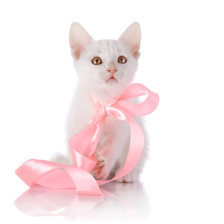 White kitten with a pink tape. photo