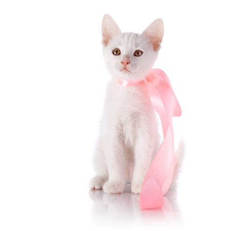 White kitten with a pink tape  Kitten on a white