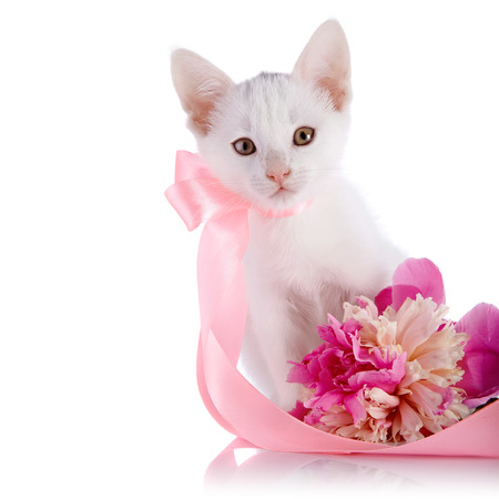 White kitten with a pink tape. White kitten and pink flower.  photo