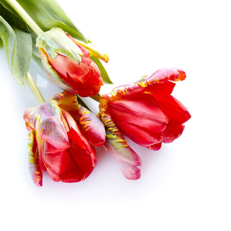 Bouquet of tulips. Spring flowers. Motley tulips. Red and yellow tulips. Stock Photo