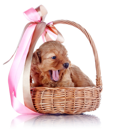 Puppy in a wattled basket with a bow.  photo