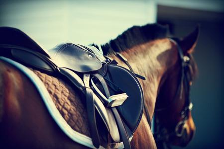caballo: Silla de montar con estribos de un lomo de un caballo Foto de archivo