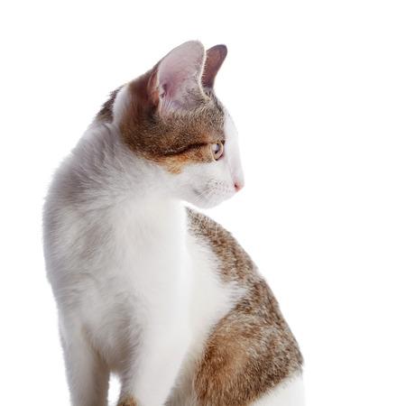 Retrato De Un Gatito En Un Perfil. Multi-color Pequeño Gatito ...