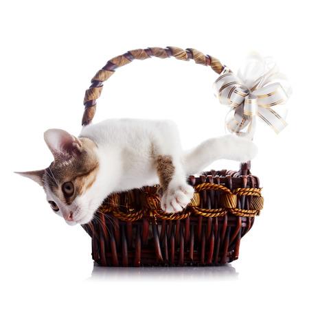 Gatito En Una Cesta Con Un Arco. Multi-color Pequeño Gatito. Gatito ...