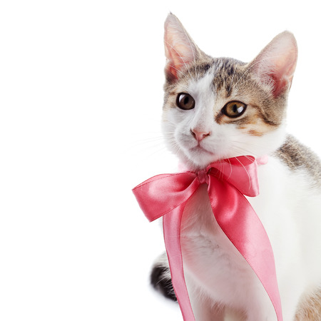 Kitten with a bow. The kitten with a pink tape. Multi-colored small kitten. Kitten on a white background. Small predator. Small cat. Stock Photo