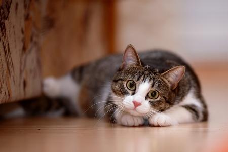 Gestreept met wit een kat. Gestreepte niet rasechte kitten. Kleine roofdier. Kleine kat. Stockfoto