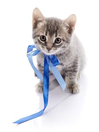 Striped not purebred kitten. Amusing gray kitten. Kitten on a white background. Small predator. Small cat. photo