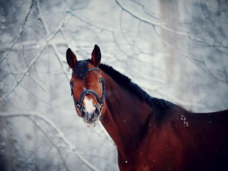 Portrait of a sports stallion. Thoroughbred horse. Beautiful horse. Stock Photo