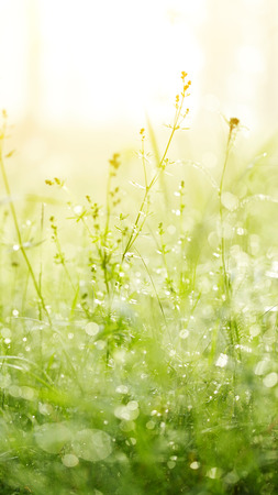 Fresh green grass with dew. Grass background. photo