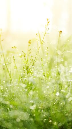 Fresh green grass with dew. Grass background. photo
