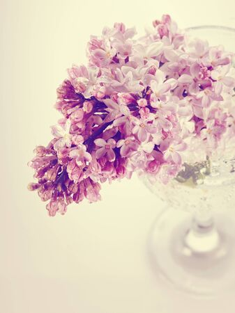 Branch with spring lilac flowers in a glass. Syringa vulgaris. photo