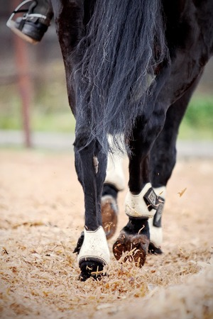racehorses: Hind legs of a black horse with the rider. Stock Photo