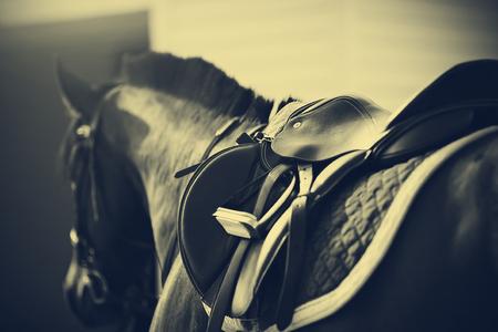 caballo: Saddle con estribos en una parte posterior de un caballo de deporte Foto de archivo