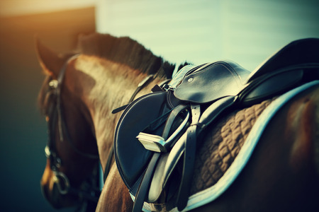 halter: Saddle with stirrups on a back of a sport horse