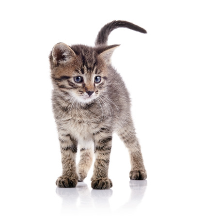 The striped lovely kitten costs on a white background.