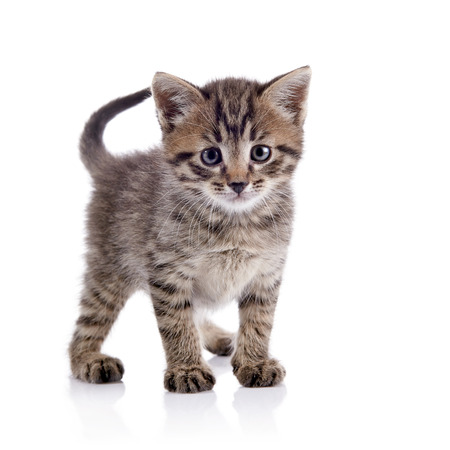 The striped kitten costs on a white background.