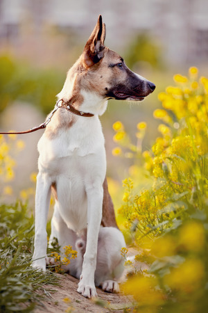 purebred: Not purebred dog sits in yellow flowers.