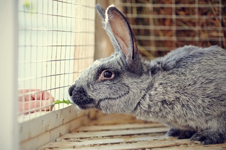 rabbit cage: Portrait of a gray rabbit in a cage.