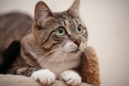 cat eye: Portrait of a gray striped domestic cat with green eyes.