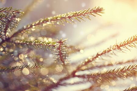 forest trees: Blurry background with fir-tree branches with patches of light from sunshine. Stock Photo