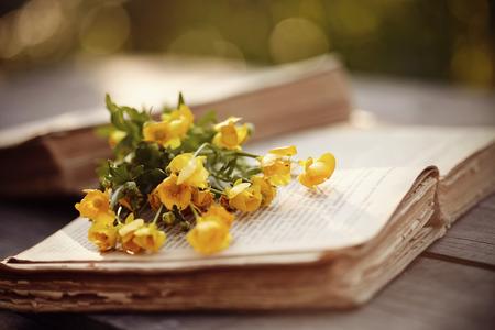 libros abiertos: Viejos libros abiertos y ranúnculos amarillos en una mesa de madera. Foto de archivo