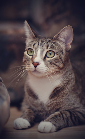 Portrait of a striped cat with green eyes.