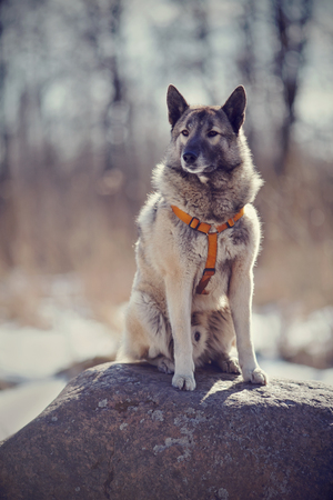 The gray fluffy domestic dog sits on a stone.