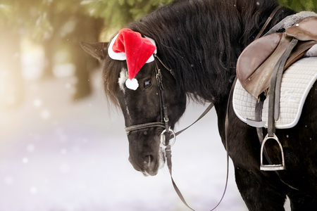 Portrait of the saddled black horse in a cap in a a red Santa Claus hat
