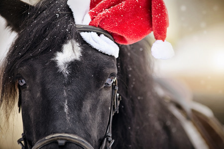 Portrait of a black horse in a a red Santa Claus hat