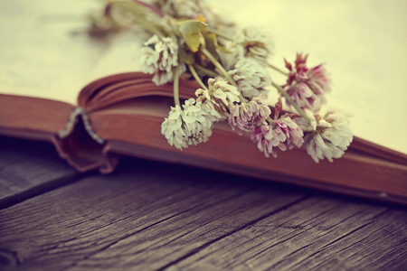 trifolium: Flowers of a clover lie on the old open book on a wooden table. Stock Photo