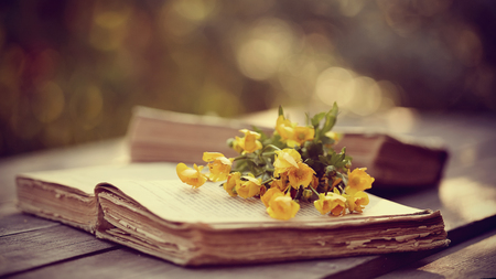 bible flower: The old open book and yellow buttercups on a wooden table.