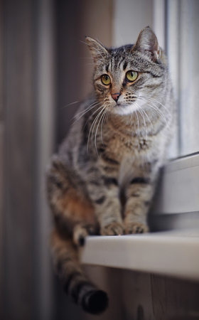 grey cat: Striped green-eyed grey cat sitting on the windowsill. Stock Photo