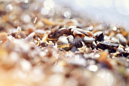 Background with shells on the shore on a sunny day.