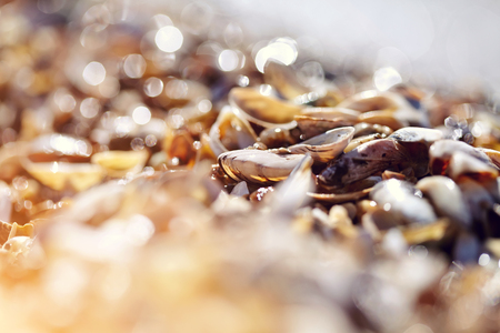 Background with bokeh, with shells on the shore on a sunny day.