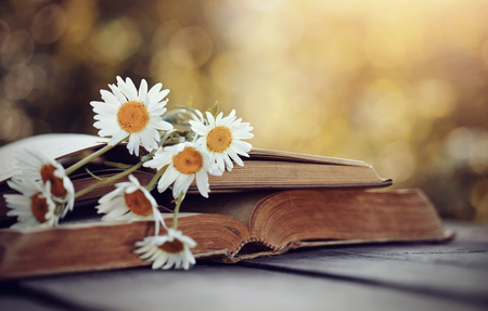 bible flower: A bouquet of camomiles rested on an old open book. Stock Photo