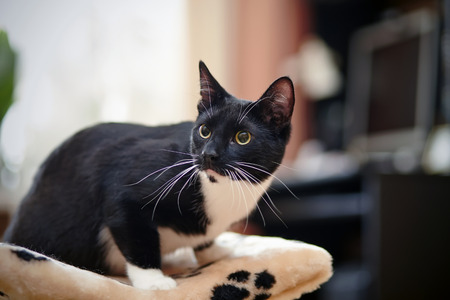 Black amd white young cat with green eyes Stock Photo
