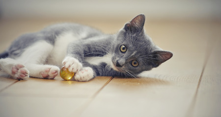 The gray kitten with white paws plays on a floor with a ball.
