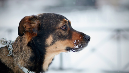 Portrait of not purebred dog in the winter. Stock Photo