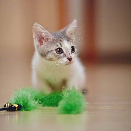 Small kitten plays with a green fluffy toy. Stock Photo