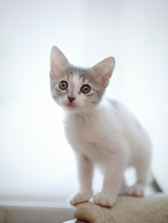 The little kitten of a color, white with spots